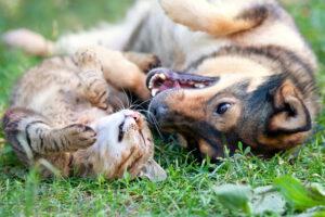 alachua county animal services